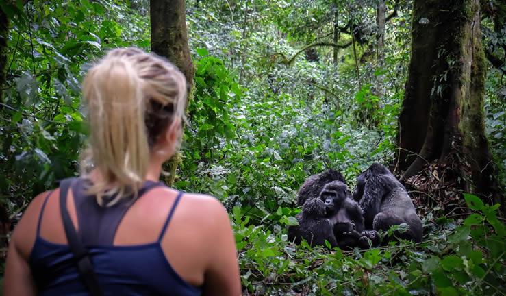 Solo-gorilla-Trekking-Tour